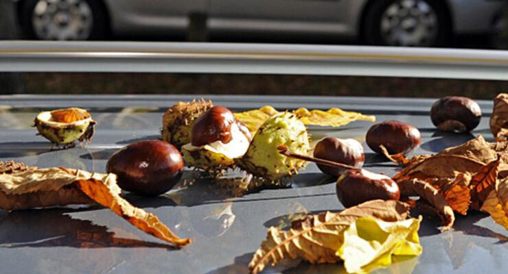 Herbst, dellen, urteil, Reisemobil, wohnmobil, caravan, wohnwagen
