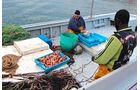 Meeresgetier für die heimischen Küchen, hier am Pier von L'Ametlla de Mar