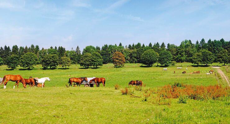 Pferdekoppel in der Nähe von Clausthal-Zellerfeld.