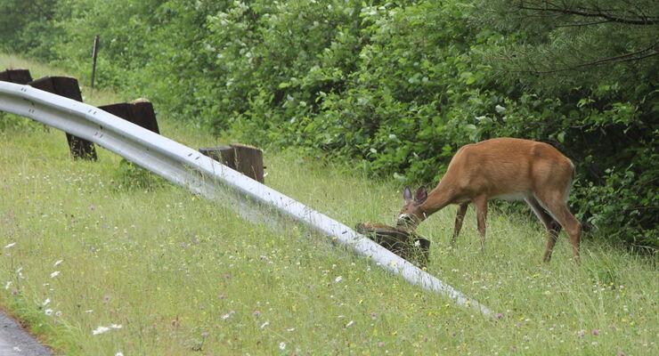 Im Frühjahr ist die Gefahr des Wildwechsels erhöht.