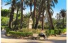 Palmen in Palermo